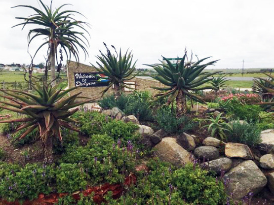 Landscaping_Transkei_Eastern_Cape_South_Africa_3