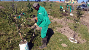 Environmental_Rehabilitation_Eastern_Cape_South_Africa_2