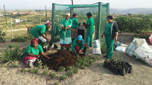 Horticultural_TRaining_Environmental_Training_Eastern_Cape_South_Africa_1