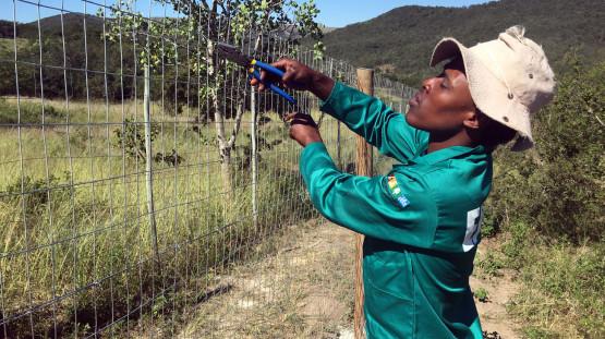Rahbilitation_Tree-Planting_Khonjwayo_2