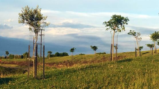 Rahbilitation_Tree-Planting_Khonjwayo_3
